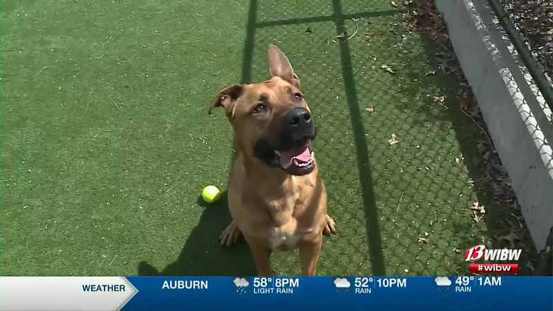 Oso is available for adoption at Helping Hands