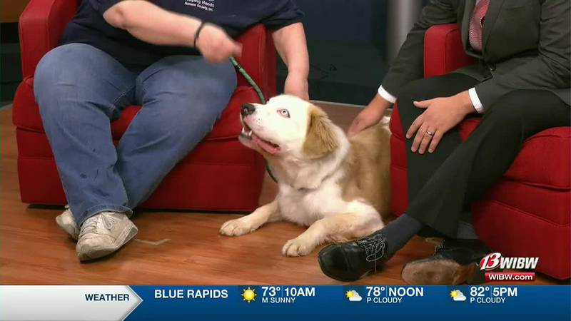 Helping Hands Humane Society - Meet Gus!