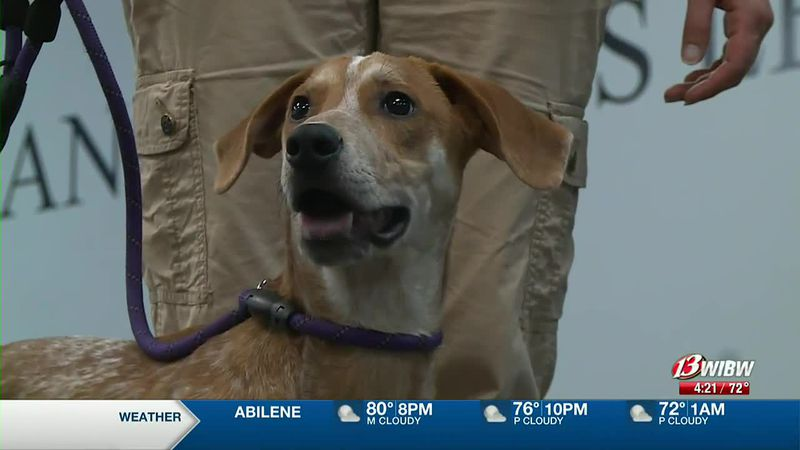 Ron Weasley is a year-old coonhound mix available for adoption at Helping Hands Humane Society.