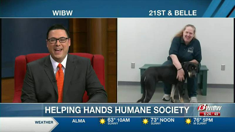 Helping Hands Humane Society - Meet Emily!