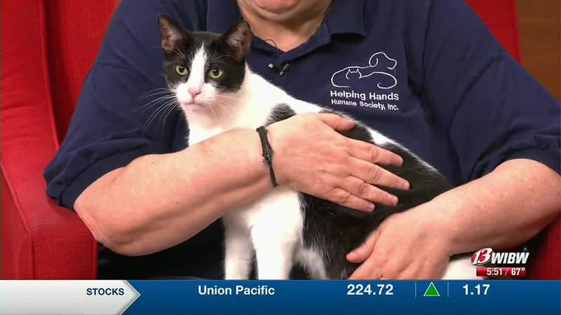 Helping Hands Humane Society - Meet Walter the Cat!