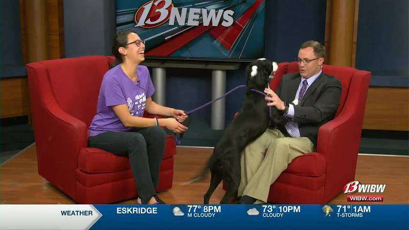 Yin, a 3-year-old border collie from Helping Hands Humane Society featured on Eye on Northeast...