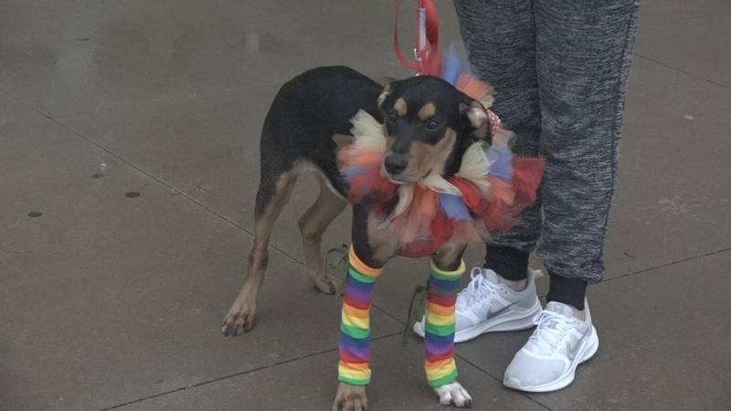 Helping Hands hosts pet costume contest at their Food Truck Night Fundraiser. (Oct. 2, 2021)