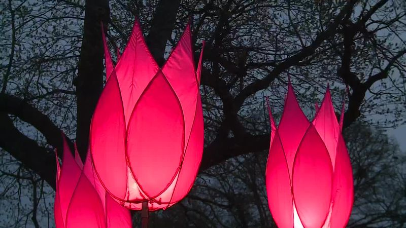 The event combines lighted displays and tulips.