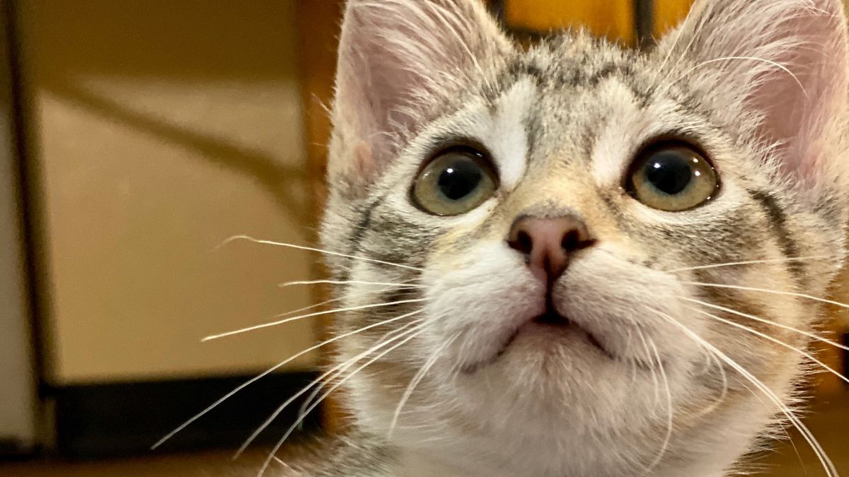Celebrate National Kitten Day and adopt a kitten.