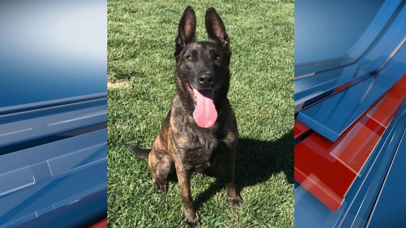The Salina Police Department announced Sunday evening that one of their K-9′s passed away on...