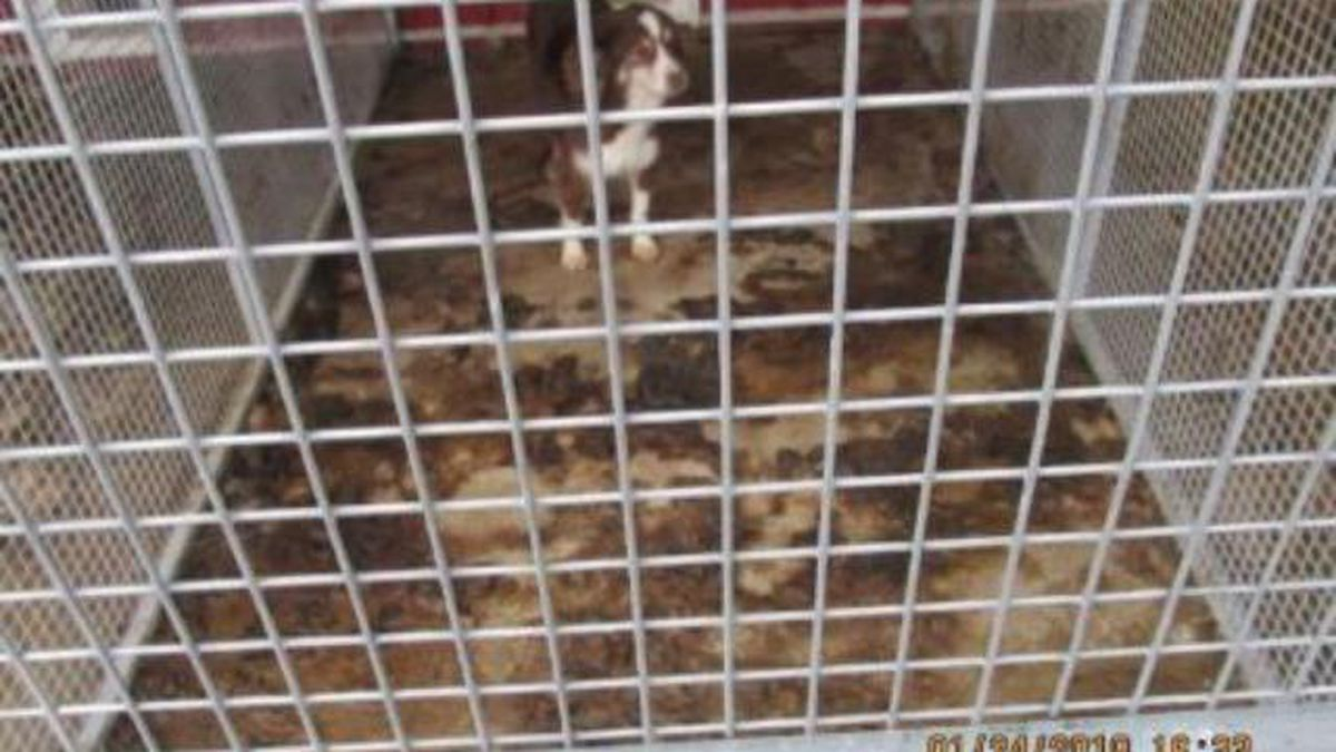 A dog had almost no clean place to stand at Patchwork Kennel in Aurora, Missouri, an operation where inspectors found a number of underwight dogs, the U.S. Humane Society says. (MO Dept. of Agriculture via USHS)