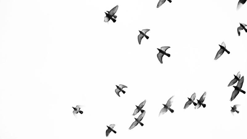 Hundreds of birds migrating through New York City this week died after crashing into the city's...