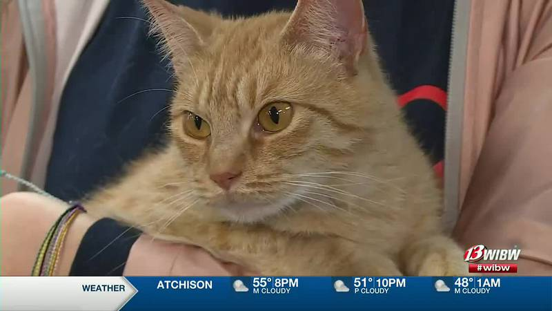 Mew2 is available for adoption at Helping Hands Humane Society.