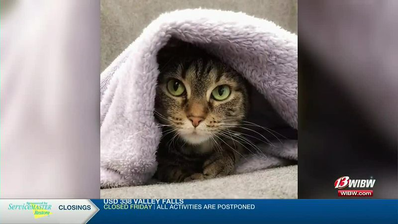 Holly, a 7-year-old cat, is available for adoption at Helping Hands Humane Society in Topeka.