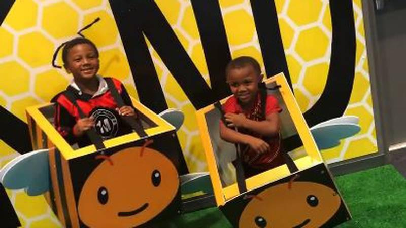 Discover Bee Exhibit