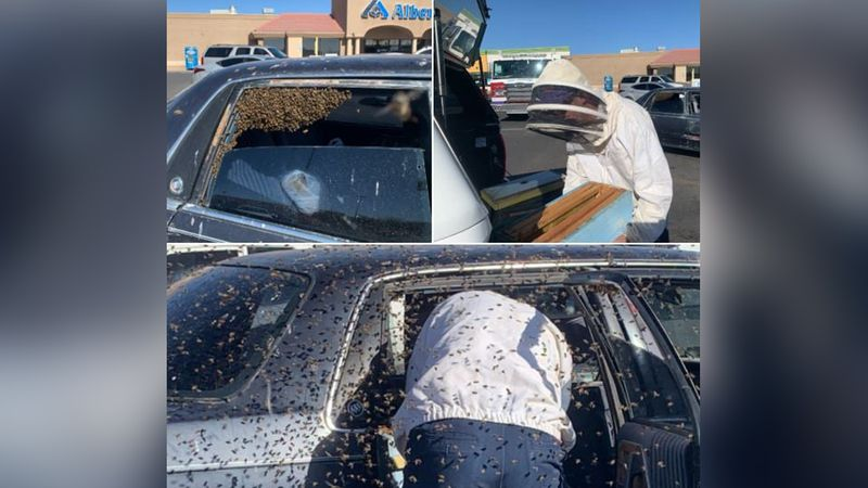 An off-duty firefighter used his experience as a beekeeper to remove thousands of bees from a...