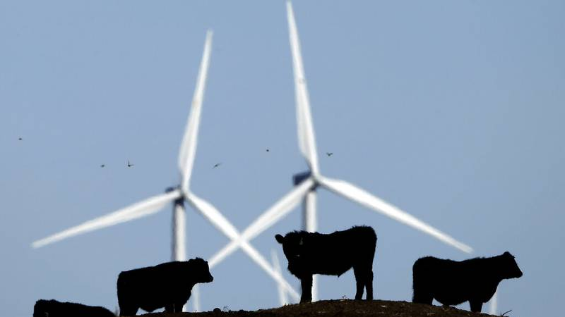 FILE - In this Dec. 9, 2015, file photo, cattle graze in a pasture against a backdrop of wind...