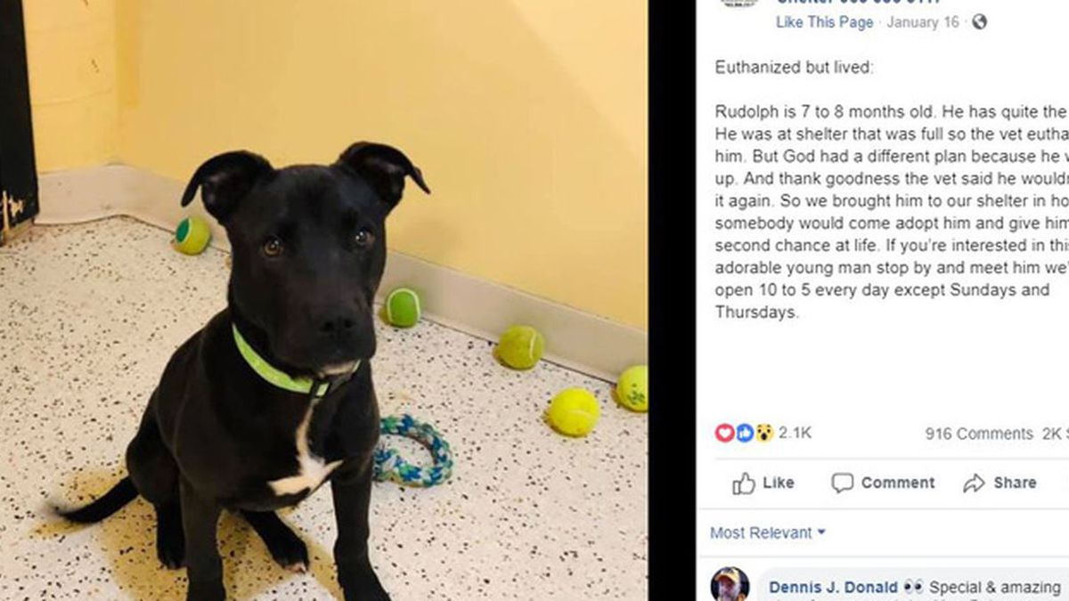 Pit-bull mix Rudolph is getting a second chance after surviving an attempt to euthanize him at an Oklahoma shelter. (Source: Kings Harvest Pet Rescue No Kill Shelter/Facebook)