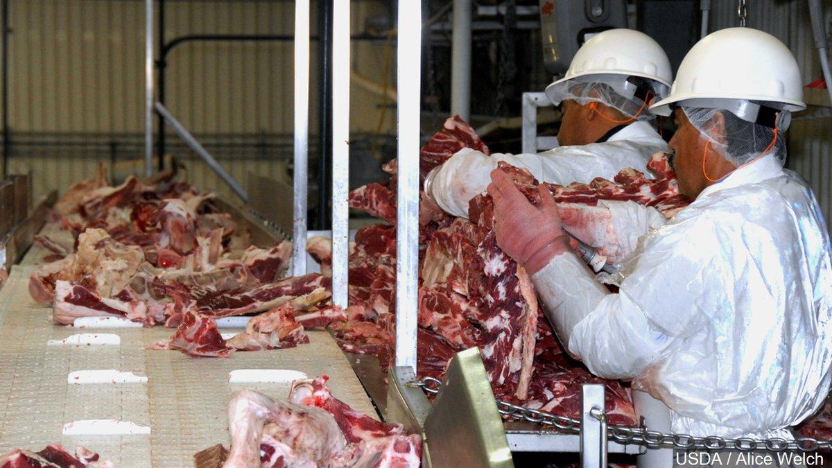 File photo, Sam Kane beef slaughterhouse in Corpus Christi, Texas