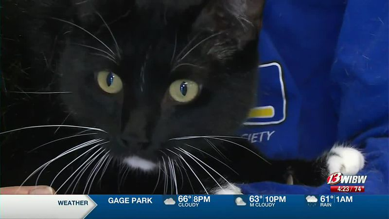 Chester is awaiting adoption at Helping Hands Humane Society