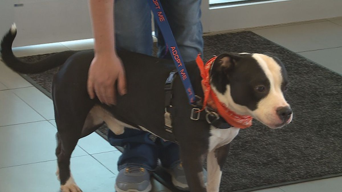 Briggs Subaru hosts free pet adoptions through Helping Hands Humane Society